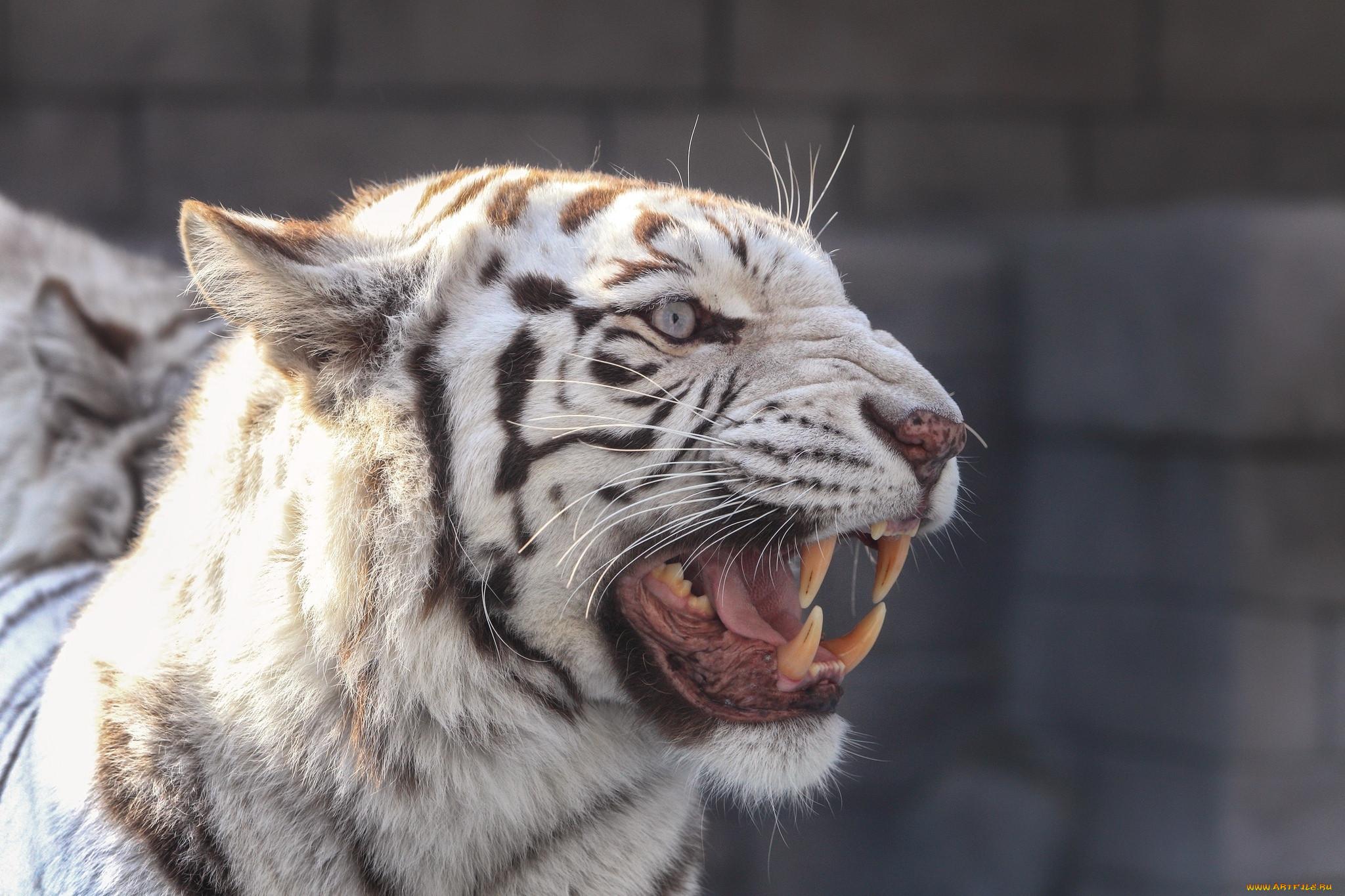 картинки рычащих животных необычные